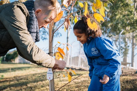 Plant a tree as part of Greening our City to help beautify and enrich Sydney