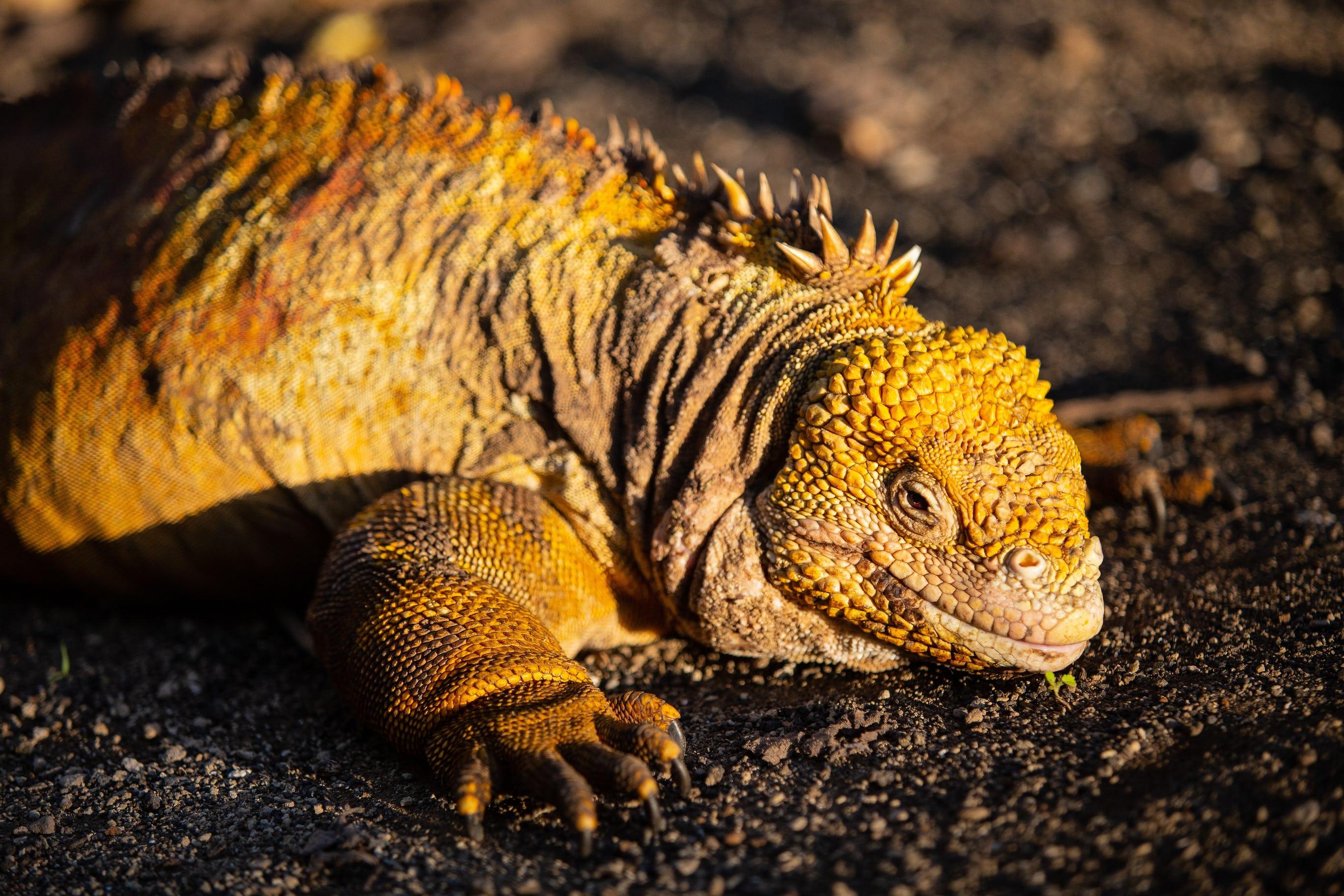 Photo of Iguana by Benjamin Kraus
